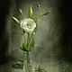Фотокартины ручной работы. Ярмарка Мастеров - ручная работа. Купить натюрморт Соло. Handmade. Болотный, зеленый, белый, оливковый, цветок