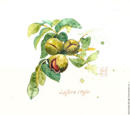 Натюрморт ручной работы. Ярмарка Мастеров - ручная работа. Купить Акварель - грецкий орех, веточка с плодами и листьями. Handmade. Зеленый