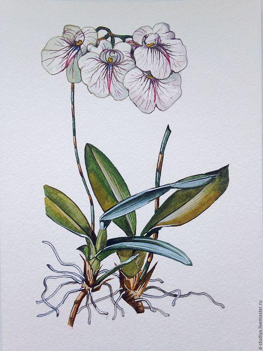 Картины цветов ручной работы. Ярмарка Мастеров - ручная работа. Купить Орхидея Фаленопсис. Handmade. Белый, картина цветов, цветы