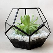 Цветы и флористика handmade. Livemaster - original item The Floriana geometric dodecahedron with Echeveria. the floriana. Mini garden. Handmade.