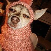Для домашних животных, ручной работы. Ярмарка Мастеров - ручная работа Комбинезон и шапочка для тоя или чихуа. Handmade.
