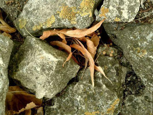 Фотокартина `Сухие листья меж старых камней` (вариант № 1)