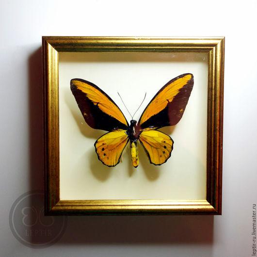 Подвески ручной работы. Ярмарка Мастеров - ручная работа. Купить Золотая Птицекрылка в золотой рамке - символ благополучия и достатка. Handmade.