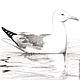 Животные ручной работы. Заказать Картина Чайка, серый белый черный птица рисунок графика карандаш. Юлия (Julrust). Ярмарка Мастеров.