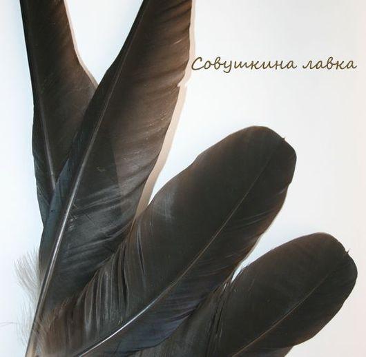 Другие виды рукоделия ручной работы. Ярмарка Мастеров - ручная работа. Купить Перья ворона. Handmade. Перья, перья для работ