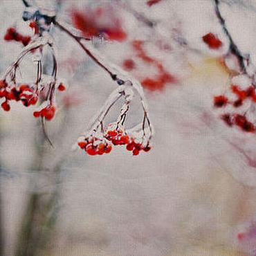 Картины и панно ручной работы. Ярмарка Мастеров - ручная работа Фотокартина Рябина пламенеет на белом, снежном одеяле декабря.... Handmade.