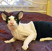 Комбинезон для кошки/ кота