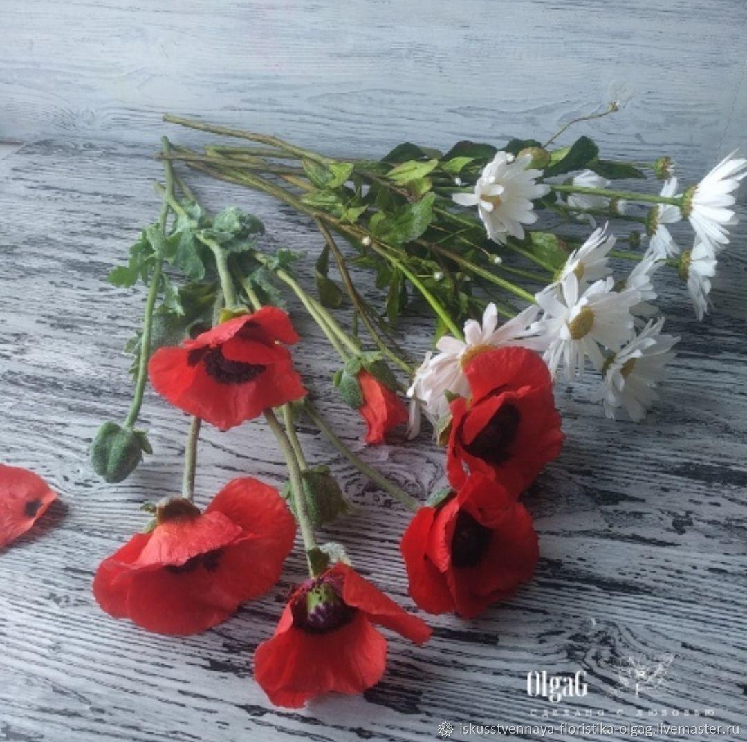Мак Восточный сорт Голиат, Цветы, Калининград,  Фото №1