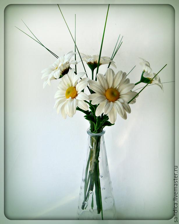 Живые цветы ромашки купить купить домашние цветы в кирове