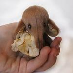 Мишки) - Ярмарка Мастеров - ручная работа, handmade