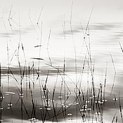 Картины и панно handmade. Livemaster - original item Black and white nature photo pictures for interiors