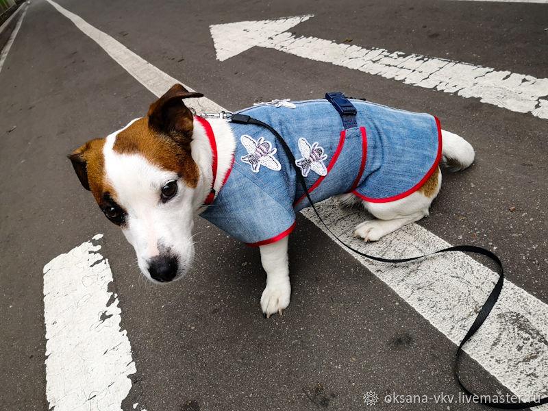 Одежда для питомцев: куртка (попона) для собак, Одежда для кошек, Москва, Фото №1