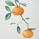 Картина акварелью Мандарины, фрукты акварелью, рисунки фруктов, Светлана Маркина, LechuzaS, 2014г.