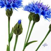 Цветы и флористика handmade. Livemaster - original item Cornflowers. Interior arrangement. Handmade.