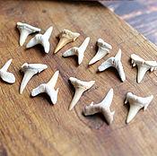 Русский стиль handmade. Livemaster - original item Fossilized shark tooth 10-23 mm. Handmade.