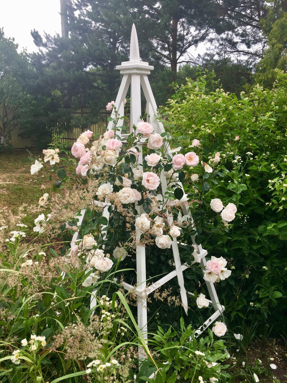 опоры для плетистых роз фотографии одном