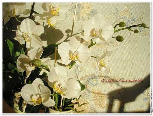 Цветы ручной работы. Ярмарка Мастеров - ручная работа. Купить Цветы из полимерной глины Белая орхидея Фаленопсис. Handmade.