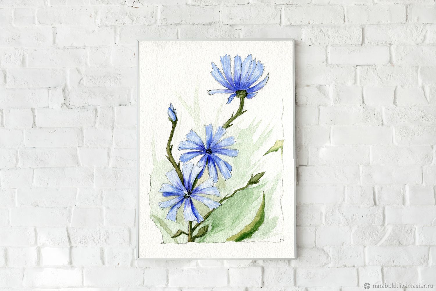 Watercolor Chicory, Pictures, Rostov-on-Don,  Фото №1