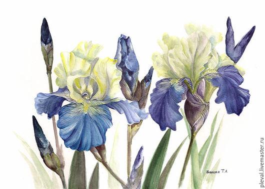 Картины цветов ручной работы. Ярмарка Мастеров - ручная работа. Купить Картина акварелью Два ириса. Handmade. Голубой