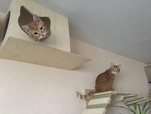 Аксессуары для кошек, ручной работы. Ярмарка Мастеров - ручная работа. Купить Настенный комплекс для кошек простой. Handmade. Кошка, для кошки