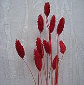 Материалы для творчества ручной работы. Ярмарка Мастеров - ручная работа Фалярис (сухоцветы) - в ассортименте. Handmade.