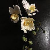 Цветы и флористика ручной работы. Ярмарка Мастеров - ручная работа Орхидея из полимерной глины. Handmade.