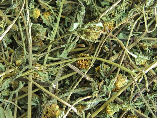Череда трехраздельная (череда обыкновенная, золотушная трава, козьи рожки, прицепа, болотная стрелка, двузубец, собачки,  собачник, шабашник)