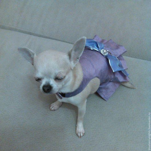 """Одежда для собак, ручной работы. Ярмарка Мастеров - ручная работа. Купить Платье для маленькой собачки """" Виола """". Handmade."""