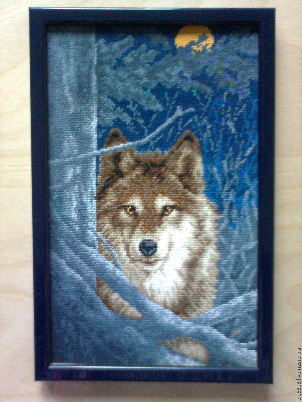 wolf, Pictures, Vsevolozhsk,  Фото №1