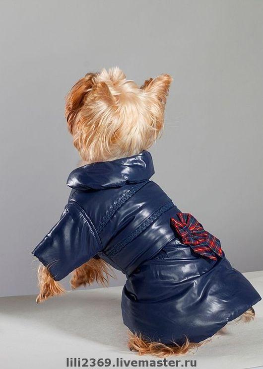 """Одежда для собак, ручной работы. Ярмарка Мастеров - ручная работа. Купить Плащик """"Глянец"""". Handmade. Плащ, той-терьер"""
