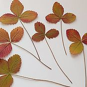 Материалы для творчества handmade. Livemaster - original item Dried leaves of wild strawberries. Handmade.