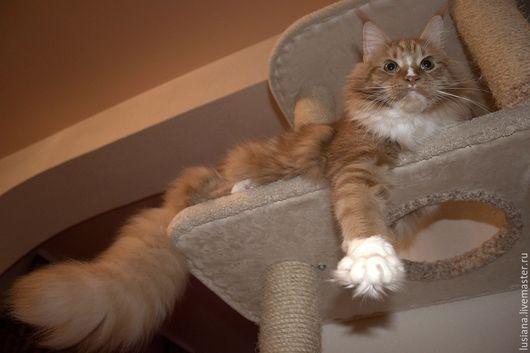 Аксессуары для кошек, ручной работы. Ярмарка Мастеров - ручная работа. Купить Домик подходит крупной кошке. Handmade. Домик для кошки