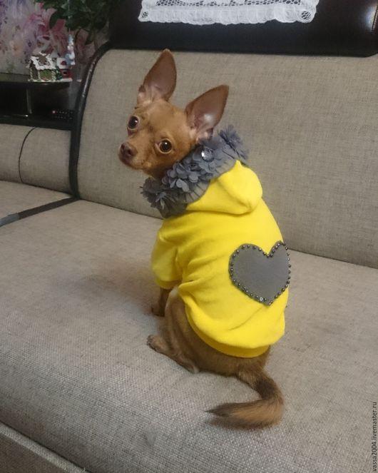 """Одежда для собак, ручной работы. Ярмарка Мастеров - ручная работа. Купить Свитшот """"Солнышко"""". Handmade. Желтый, той-терьер, пудель"""