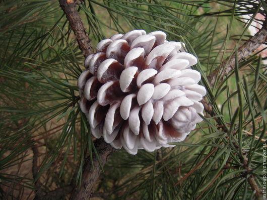 новогодний подарок еловая шишка кедровая шишка лесной аромат новогодние сувениры и подарки ёлочка новогодняя новый год подарок под елочку