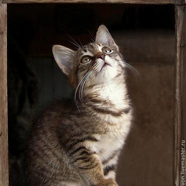 """Картины и панно ручной работы. Ярмарка Мастеров - ручная работа Фотокартина """"Котёнок"""". Handmade."""