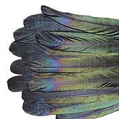 Материалы для творчества ручной работы. Ярмарка Мастеров - ручная работа Перья сороки длинные. Handmade.