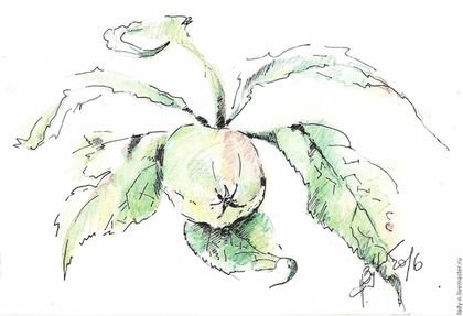 Зелёное яблоко`, рисунок,  акварельные карандаши, гелевая ручка