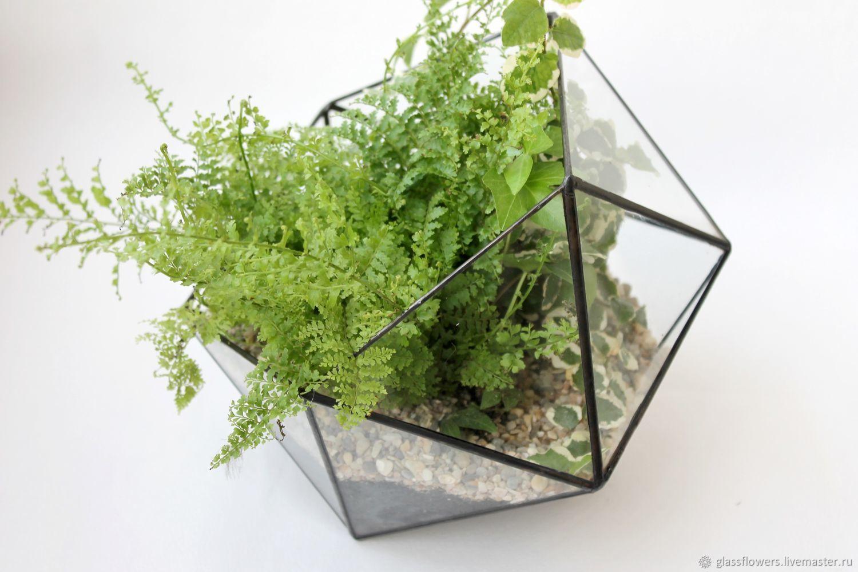 The Floriana. Geometric Floriana Icosahedron with fern, Florariums, St. Petersburg,  Фото №1