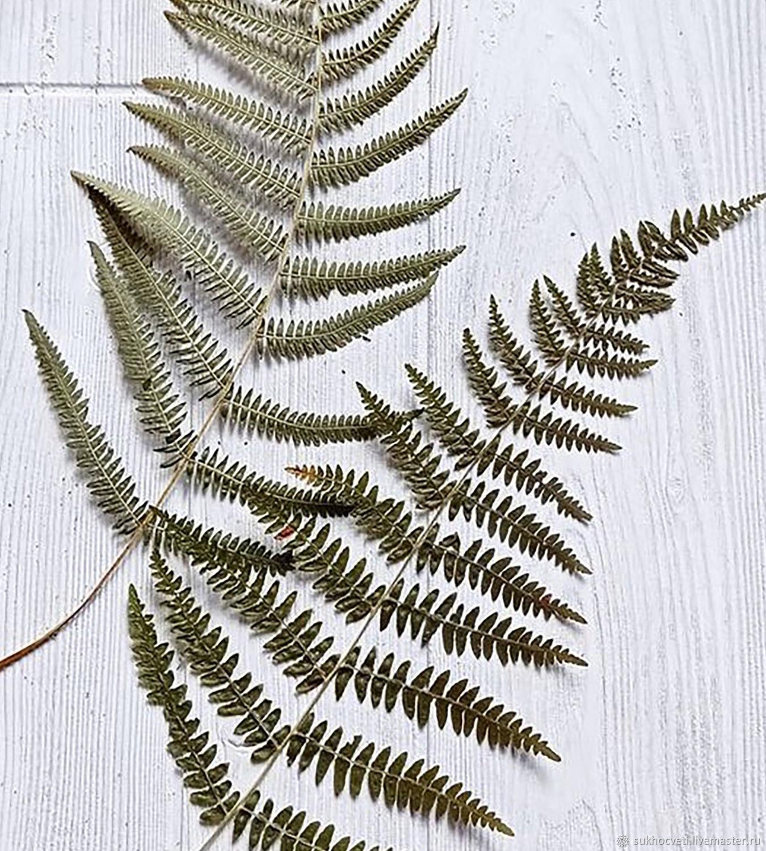 Листья папоротника стабилизированные. 40см, Сухоцветы, Сочи,  Фото №1