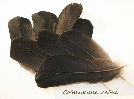 Другие виды рукоделия ручной работы. Ярмарка Мастеров - ручная работа. Купить Перья тетерева черные. Handmade. Перья