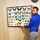 Самые красивые бабочки мира (подборка) Панно размер 70*90 см, рамка `под красное дерево`. Использованы тропические бабочки из разных стран мира: Парусники, Морфиды, Птицекрылки, Желтушки, Нимфалиды.