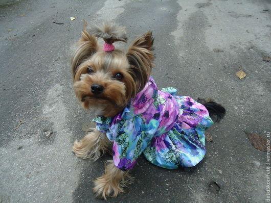 Одежда для собак, ручной работы. Ярмарка Мастеров - ручная работа. Купить Плащ - комбинезон  Лапушка. Handmade. Комбинезон, элегантно, шпиц