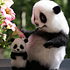 Куклы и игрушки ручной работы. Ярмарка Мастеров - ручная работа. Купить Панда и пандочка. Handmade. Чёрно-белый, животные, шерсть