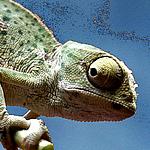 Сhameleon- украшения ручной работы - Ярмарка Мастеров - ручная работа, handmade