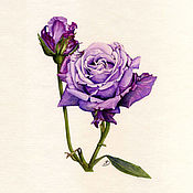 Картины и панно ручной работы. Ярмарка Мастеров - ручная работа Лиловая роза. Акварель. Handmade.