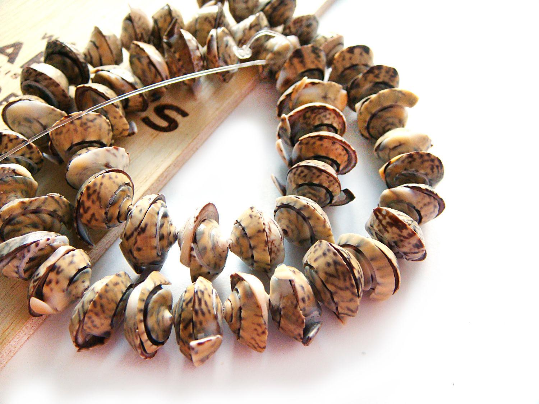 Beads huggers cut olive shell, Beads1, Bryansk,  Фото №1