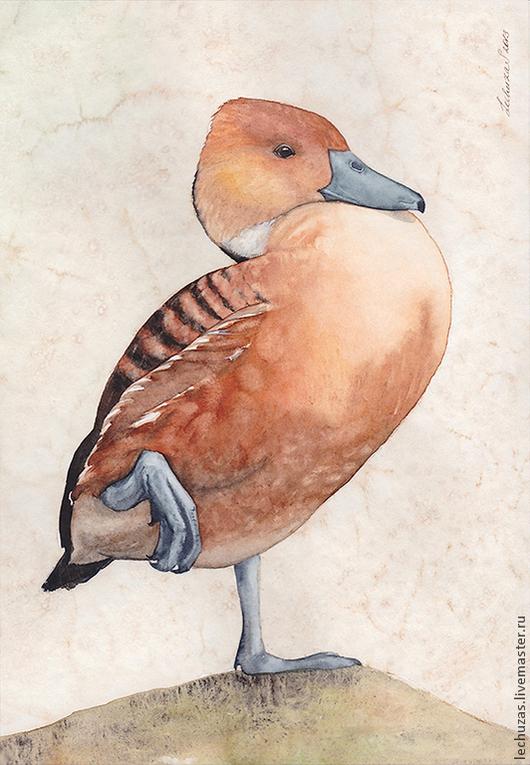 Рыжая свистящая утка. Серия Утки, акварель, размер 18см*26см, Светлана Маркина, LechuzaS
