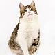 Фото и видео услуги ручной работы. Ярмарка Мастеров - ручная работа. Купить Студийная фотосъемка кошек. Handmade. Фотосессия, фотография