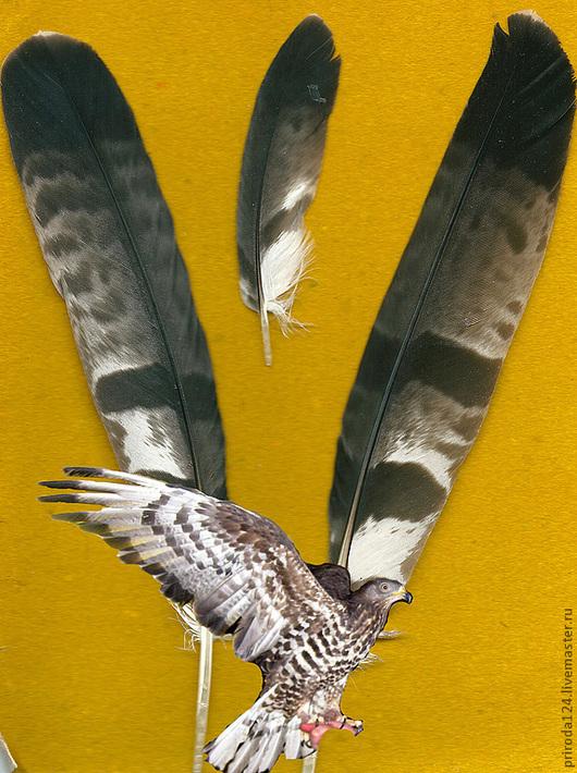 Маховые перья