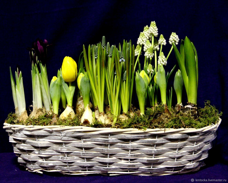 """Первоцветы """"Весна"""" Садовые весенние цветы на 8 марта, Букеты, Москва,  Фото №1"""